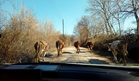 What traffic looks like on a countryside road
