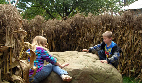 The cornstalk maze