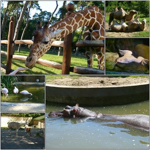 Notice my hand feeding the giraffe.