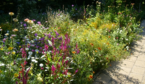 The whole garden was in bloom, and ever so colorful!