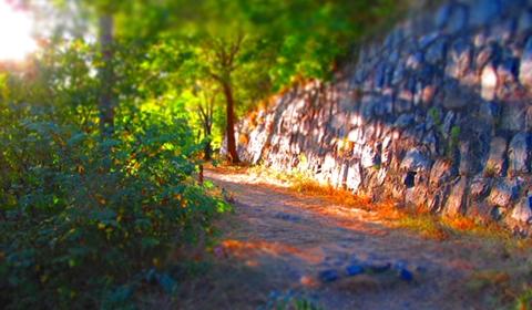 One of Cetatuia Hill's hidden pathways.