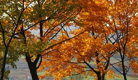 Leaves turning...