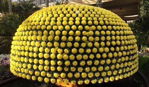 "Massive ""hat"" of Chrysanthemum arrangement"