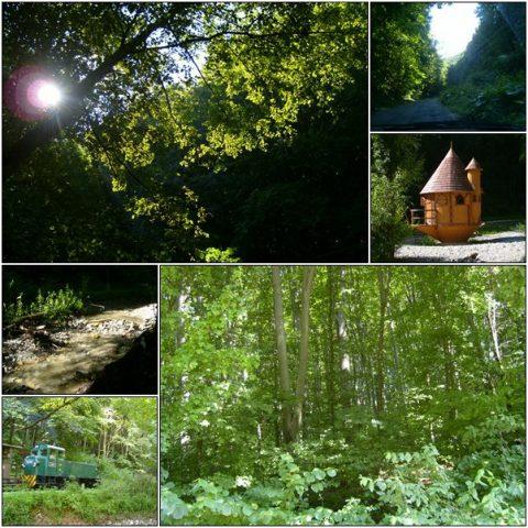 Ómassa – the Varga Mountain beech forest