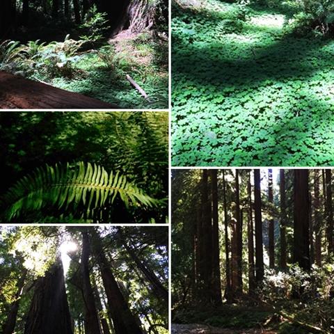 page muir woods