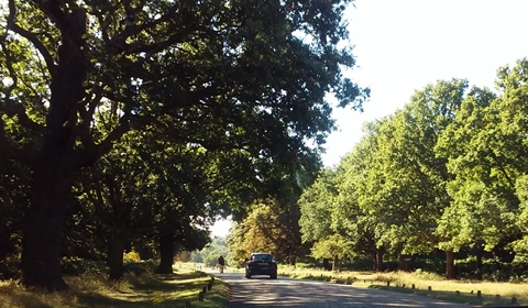 The drive through Richmond Park