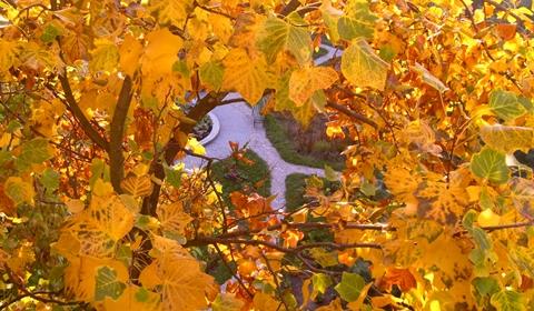 A peek through golden leaves.
